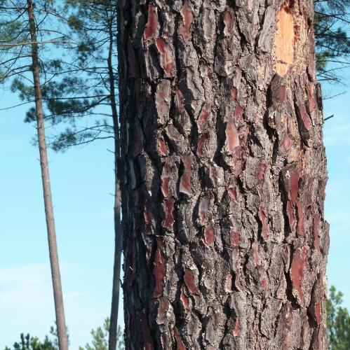 Protéger et préserver des attaques d'insectes à larves xylophages