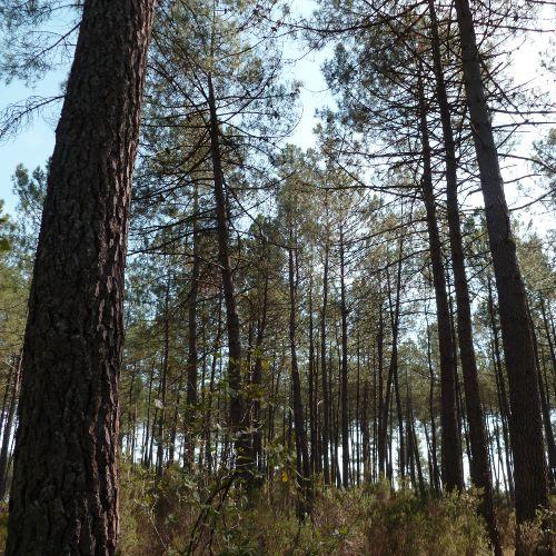 Le bois, une grande diversité pour une multitude d'applications
