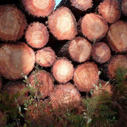 Les différentes utilisations du bois à travers les siècles