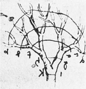Dessin de LdV illustrant le rapport tronc/branches