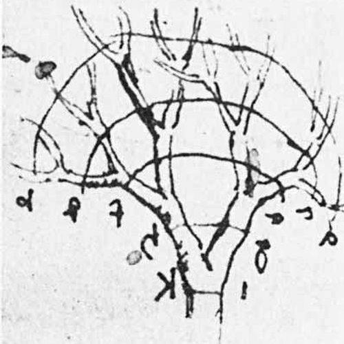 Le rapport tronc/branches qui explique la forme des arbres