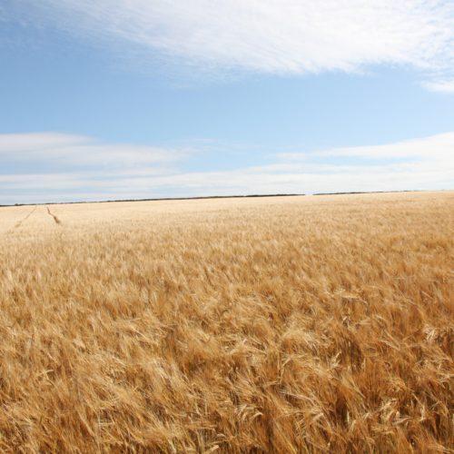 La bioéconomie, l'économie en faveur de l'environnement ?