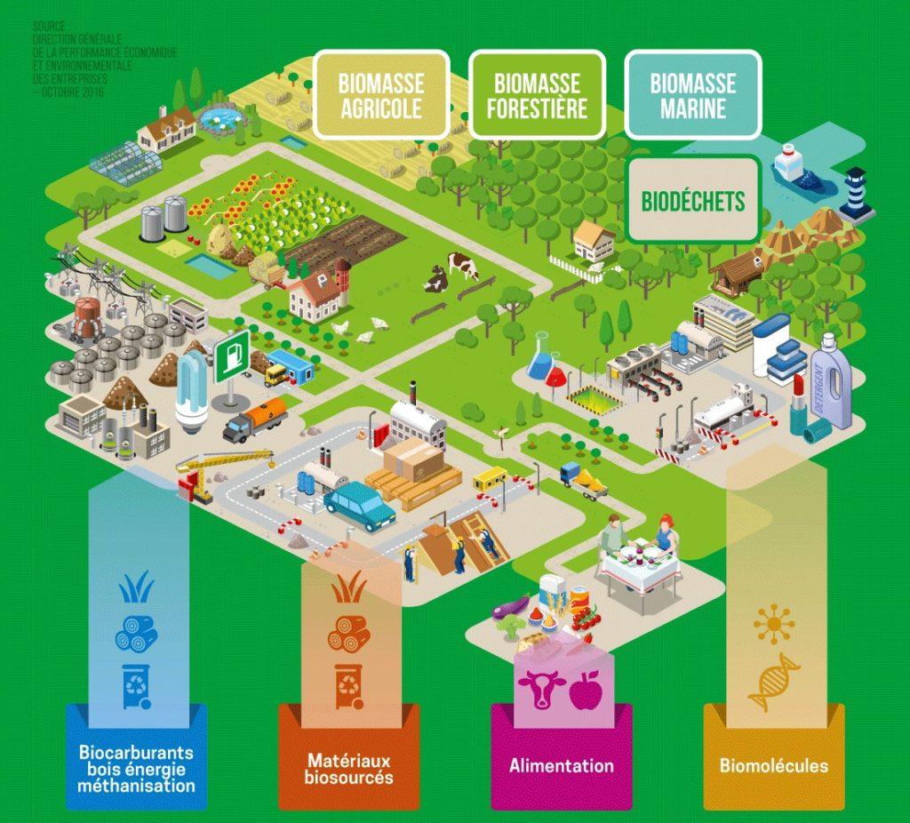 Infographie sur la bioéconomie par le site agriculture.gouv.fr